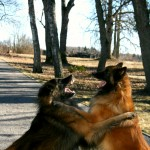 Koerad mänguhoos 2